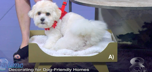 Luxury dog beds and design in Tampa
